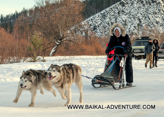 Dog sledding trip at Lake Baikal